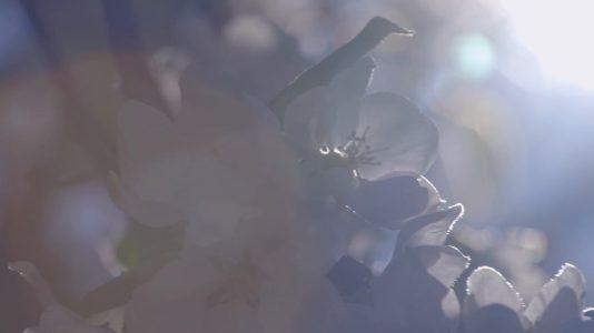 OneMinStoryn videotuotanto: Hopearanta -palvelutalon esittelyvideo